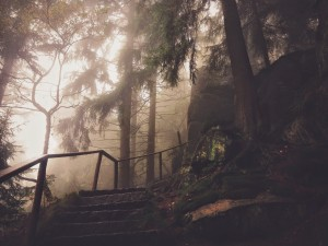 forest-trails-stairs-1